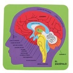 puzle de Goma eva sistema cerebral 21,2x21,5x0,7cm